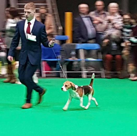 lucy at crufts